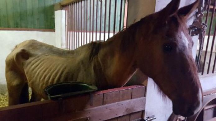 Een van de verwaarloosde dieren die de politie in Halderberge vond.