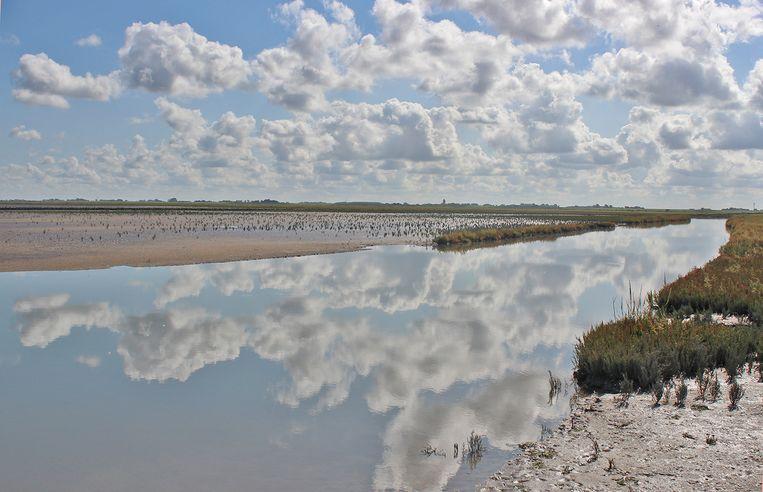 Het natuurgebied Fryslân Bûtendyk. Beeld Dico de Klein en Hendrik van Kampen