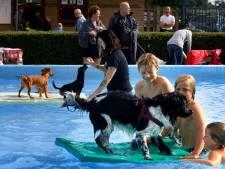 Het zwemseizoen is voorbij: nu mogen de honden een duik nemen