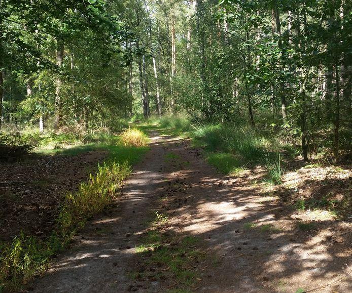 Een van de twee wegen die Landgoed De Rozephoeve van de gemeente Oisterwijk mag afsluiten voor openbaar verkeer (wandelaars kunnen er wel gebruik van blijven maken)