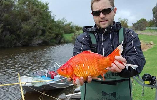 Freshwater Fish Group