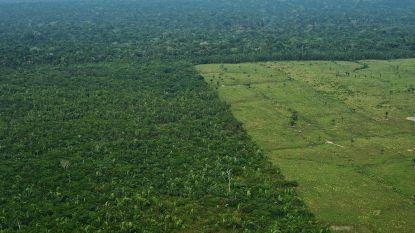 10.000 vierkante kilometer Amazone ontbost in een jaar