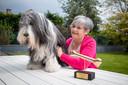 Des, de hond van Monique Hertleer, wint de titel Harigste Hond van Vlaanderen (Joe FM)