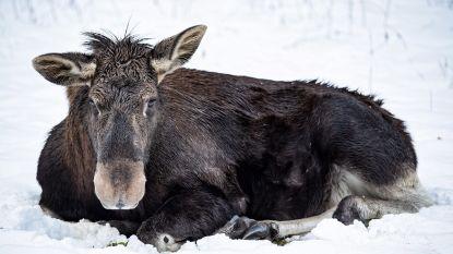 Jager schiet zoon dood nadat hij hem aanzag voor eland
