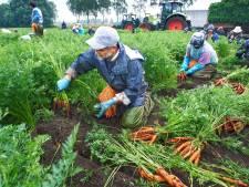 Actiegroep: 'groenteverwerker Jonkergouw hoort op een industrieterrein'