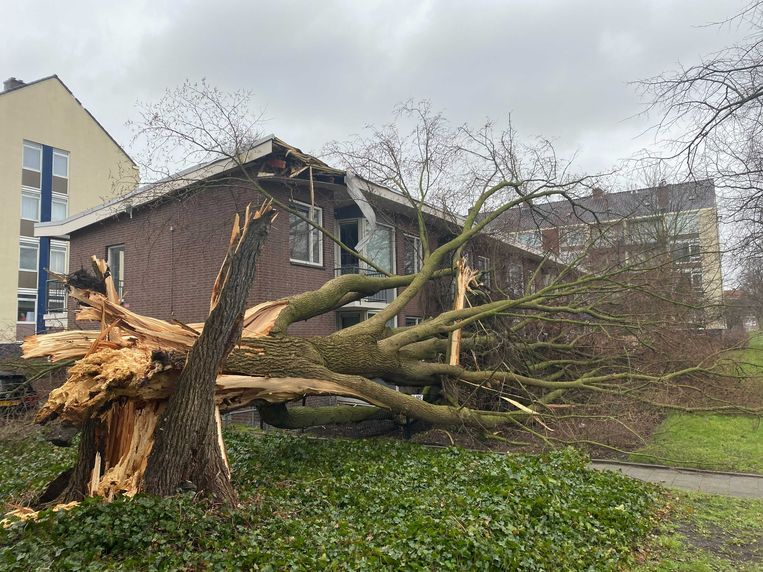 Een woning aan de Vlaardingenlaan is behoorlijk beschadigd door een omgevallen boom. Beeld Ruben Koops