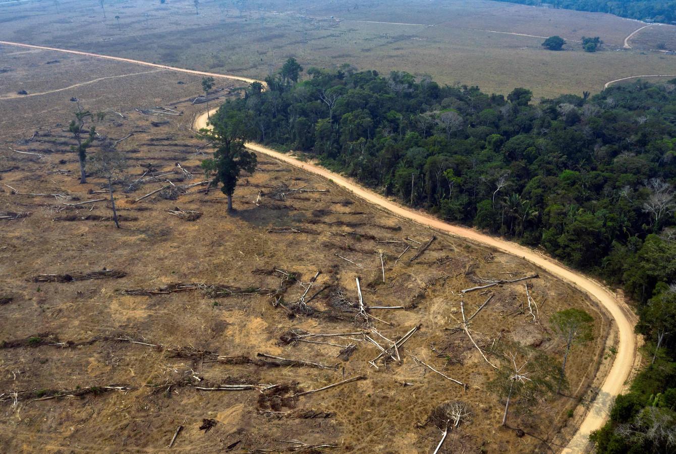 Archiefbeeld. Vorig jaar werd al 8.426 km2 van het Amazonewoud vernield, deels als gevolg van bosbranden en illegale ontbossing.