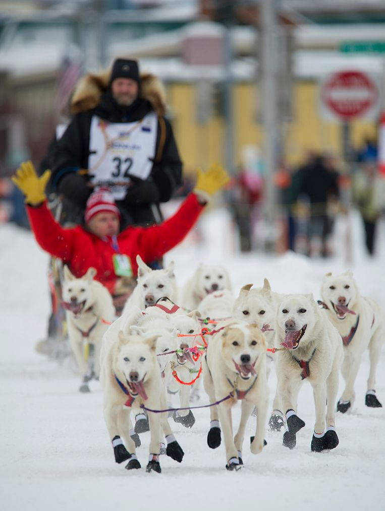 Alaskan musher Jim Lanier's dog team is all smiles during the ceremonial start of the Iditarod Trail Sled Dog Race, Saturday, March 3, 2018, in Anchorage, Alaska. (AP Photo/Michael Dinneen) Beeld AP
