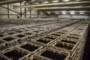 De wormenkwekerij in Almkerk wil uitbreiden.