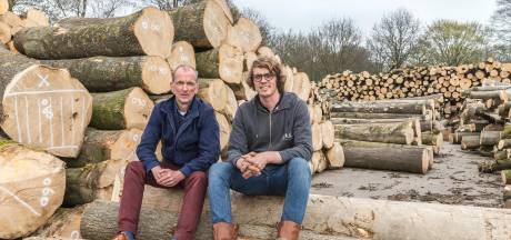 Houtzagerij krijgt 2000 bomen van gemeente Zwolle, maar die zegt nu: 'Stoppen. Jullie zagen te veel'