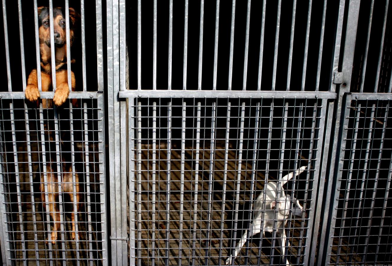 De dagopvang van dierenasielen zit weer volgeboekt, nu mensen vaker naar kantoor gaan.