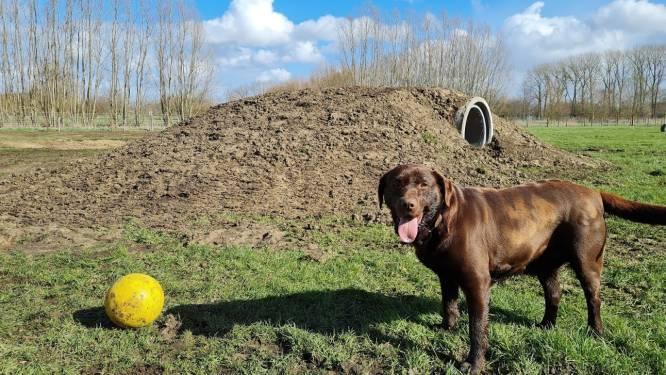 Honden en hun baasje kunnen zich ongestoord uitleven op speelweide Waf en Woef in Zingem