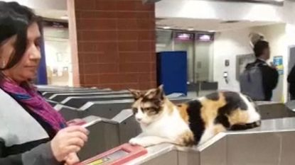 VIDEO. Dit is de kat Mitsi, dé ster van het treinstation