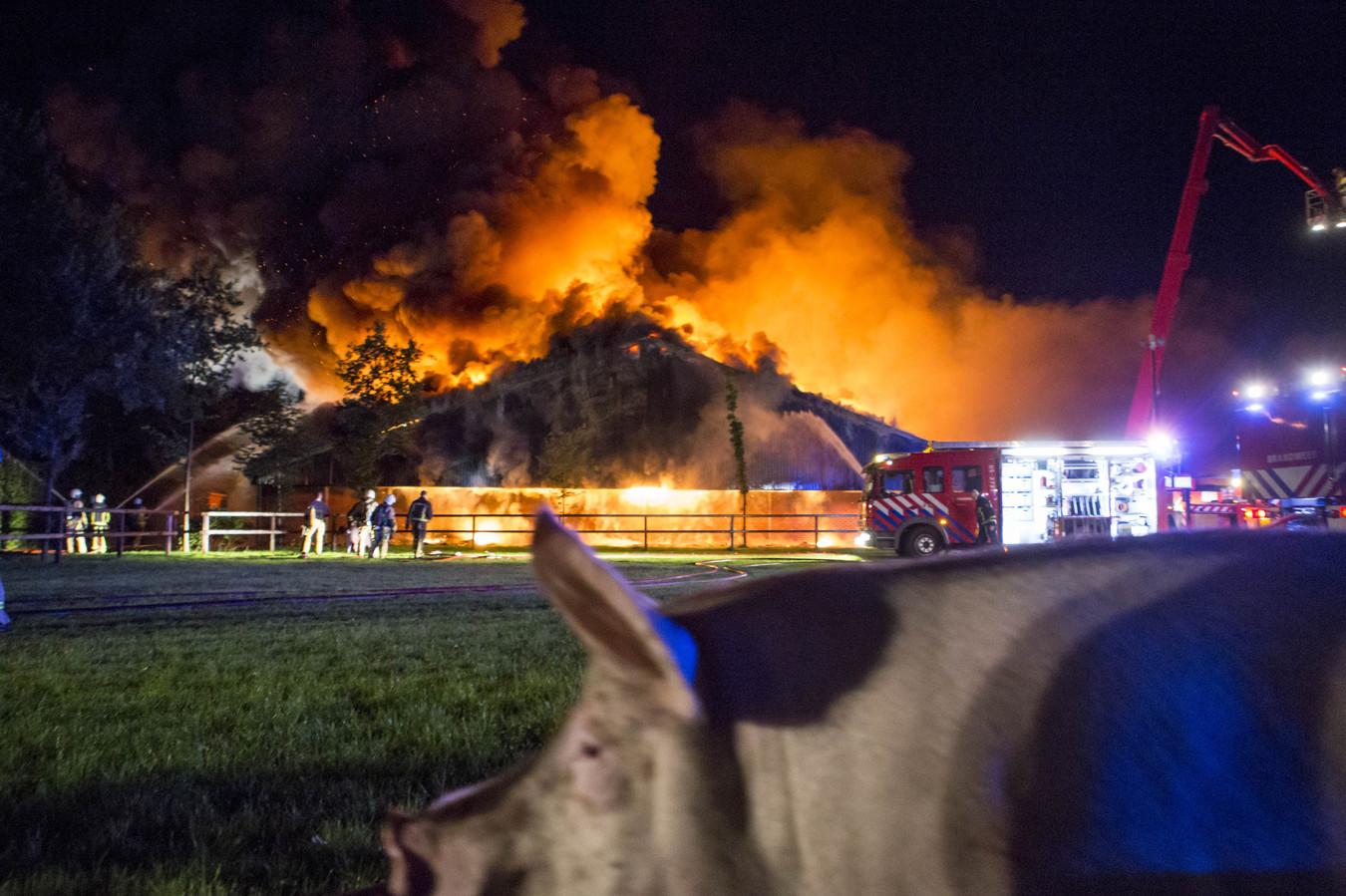 Een grote brand waarbij meerdere varkensschuren in de as werden gelegd. Zo'n 10.000 varkens kwamen om.