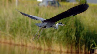Natuurgebied Blokkersdijk zoekt conservator