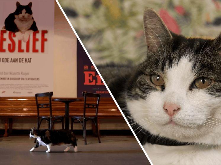 Nederlands bekendste kat binnenkort te zien op Netflix