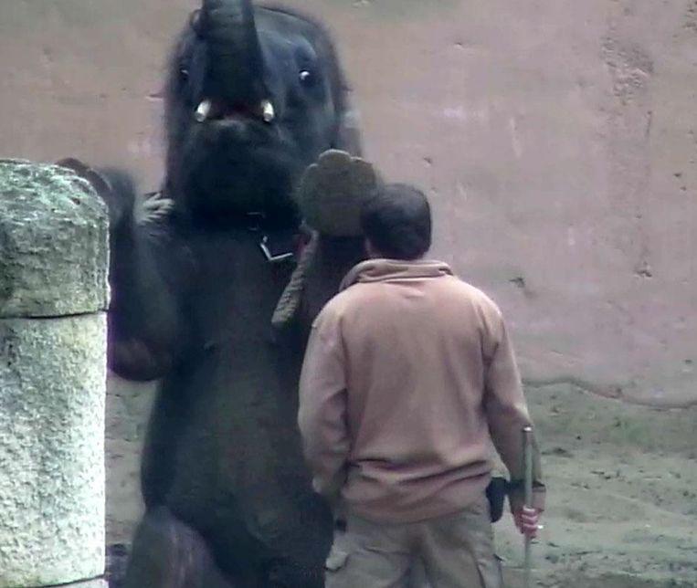 Babyolifant in de dierentuin van Hannover. Beeld swr.de