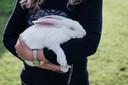 Eén van de konijnen van fokker Henk Oonk uit Vragender.