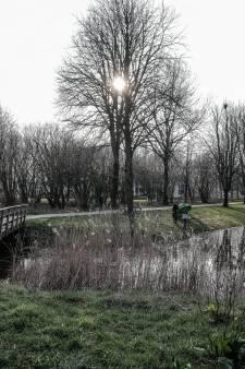 Roeken bouwen tien nieuwe nesten in Zevenaars park Rosorum: 'Kwestie van goodwill en fatsoen om vogels met rust te laten'