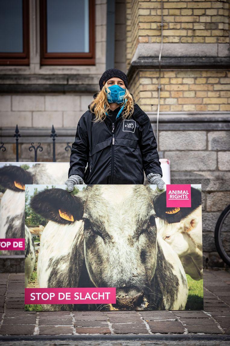 Animal Rights maakte in 2017 undercoverbeelden die wantoestanden in het slachthuis van de groep Verbist blootlegden. Beeld BELGA