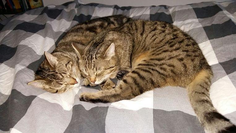 Cosmo en Froomey Beeld