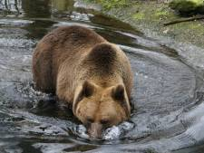 Het berenbeklag