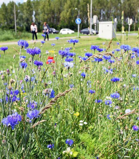 Hulster scholieren lief voor de bloempjes en de bijtjes