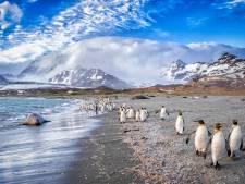 Grootste ijsschots ter wereld op ramkoers: hongerdood dreigt voor duizenden dieren