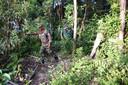 Politie en vrijwilligers zoeken naar de vermiste Amelia Bambridge op het Cambodjaanse eiland Koh Rong.