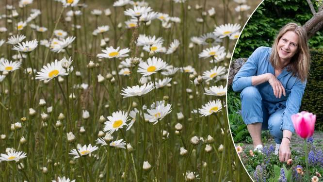 Mooi, makkelijk én bijvriendelijk: tuinexperte toont hoe je tuiniert met wilde planten
