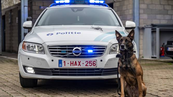 """Nieuwe initiatieven binnen politiezone werpen vruchten af: """"Goede resultaten geboekt in strijd tegen drugs"""""""