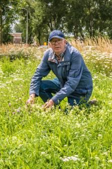Stadsecoloog André (61) in de race voor titel 'beste bermbeheerder': 'Berm heeft grote natuurwaarde'