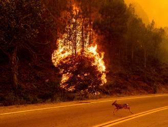 IN BEELD. Brandweer strijdt tegen vlammenzee in Californië