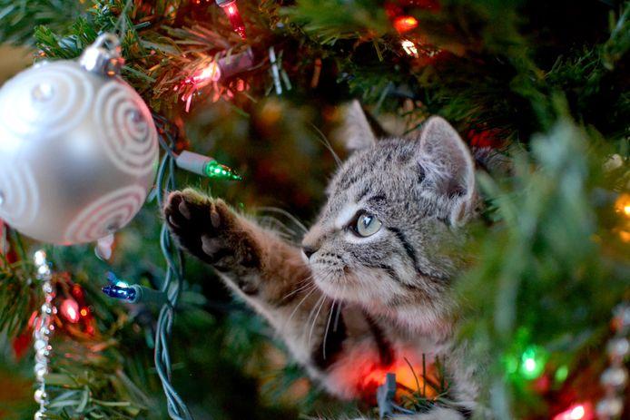 Heb je een echte kerstboom in huis? Gezellig! Maar let op en houdt je huisdier dan de komende tijd goed in de gaten.