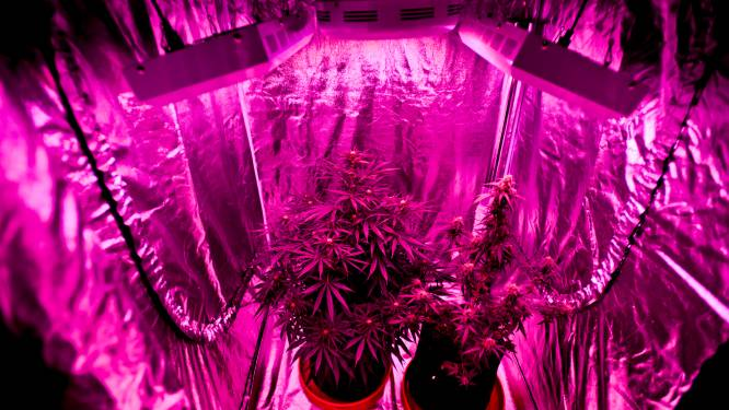 Politie neemt cannabisplanten en kweektent in beslag
