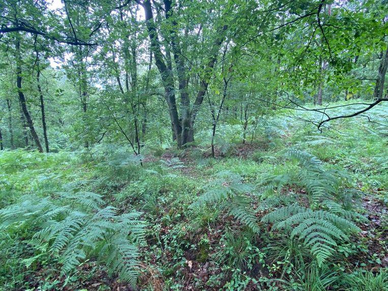 De plek in het Dilserbos waar het lichaam van de militair werd aangetroffen.  Beeld Mine Dalemans