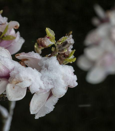 Sneeuw in april zien we gemiddeld eens per drie jaar: 'Warmte vorige week was uitzonderlijker'