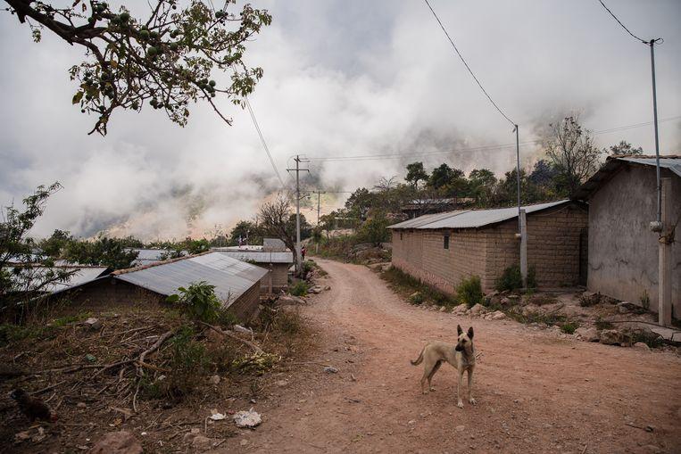 's Ochtends vroeg in Ayahualtempa, waar het alleen bedrieglijk vredig is. Samen met vijftien andere dorpjes in de streek is het dorp het toneel van nietsontziend geweld. Beeld Ariana Drehsler