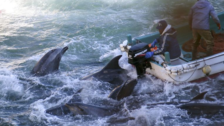Archiefbeeld: Vissers jagen op dolfijnen. Beeld ap