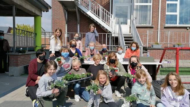 Vriendenkring basisschool De Vlinder zet Velzeke en omstreken in zomerbloei