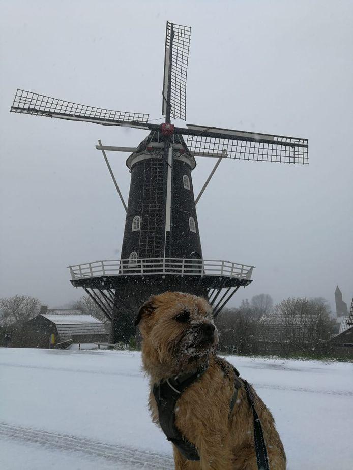 Ollie in een besneeuwd Haaften