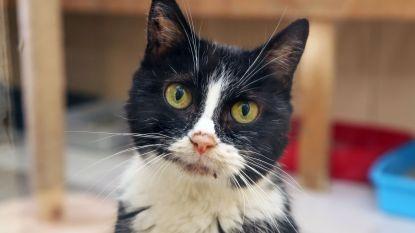 Stad komt tussen bij castratie of sterilisatie en chippen en registreren van huiskatten