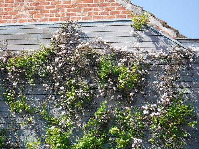 """""""Een degelijke klimhulp zorgt er voor dat de planten nog zo snel en goed groeien"""", zegt Verschaeve, die dat ook zelf aantoont in zijn demotuin."""
