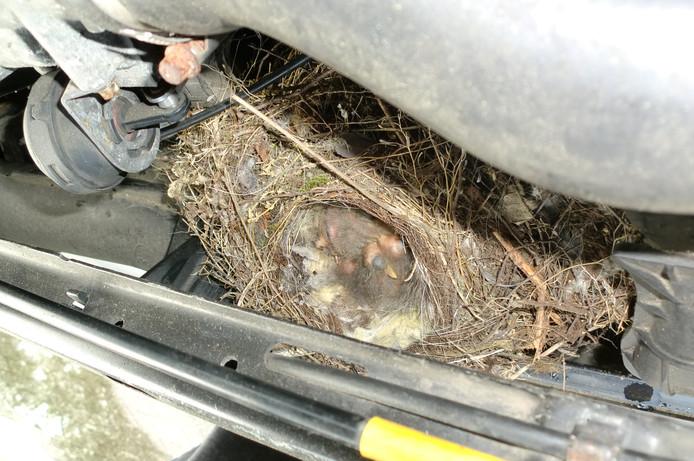 Vogelnest onder motorkap