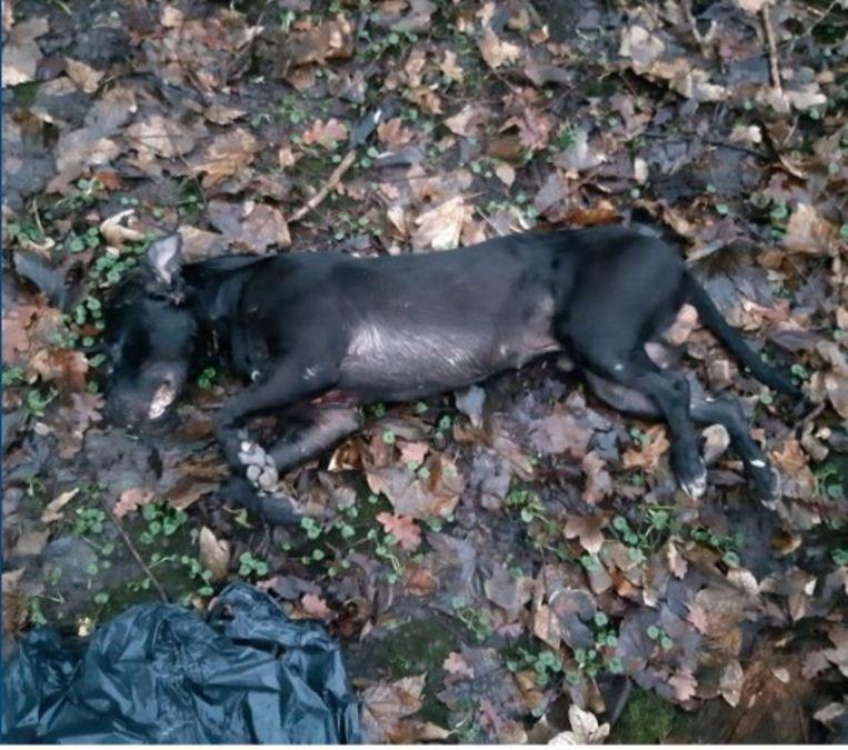 Het kadaver van de hond in het Vliegenbos. Beeld Politie