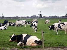 22 miljoen euro voor 'slappe grond' in Alblasserwaard