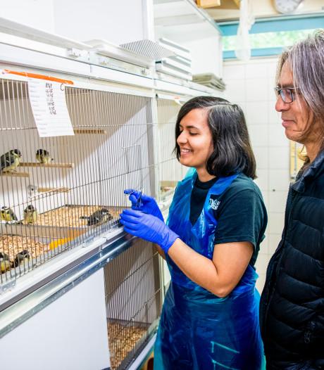 Vogelklas Karel Schot staat paraat voor roekeloze fladderaars en jonge pechvogels