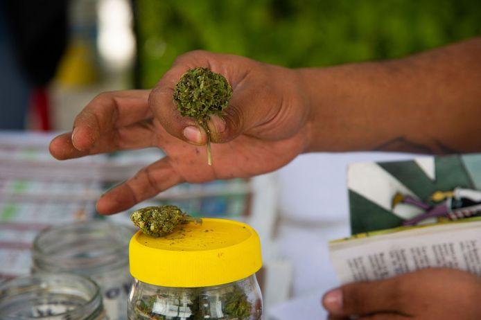Een lid van de Mexicaanse Cannabis Beweging toont een cannabisbloem bij de Mexicaanse Senaat.