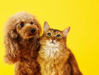 """""""Behandel huisdier als medemens als je besmet bent met corona"""""""
