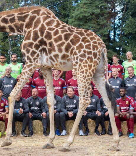 Prominente rol voor giraffen en zebra's op nieuwe teamfoto's Vitesse